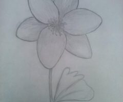 Kwiaty LO